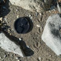 Spotted Sandpiper Tracks