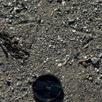 Whimbrel (Numenius phaeopus) Tracks