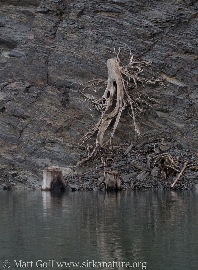 Skeleton Stump
