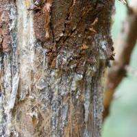 Brown Bear Sign Tree