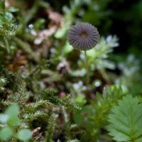 Unidentified Mushrooms