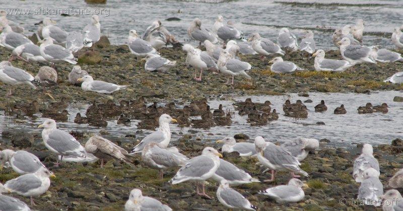 Totem Park Birds