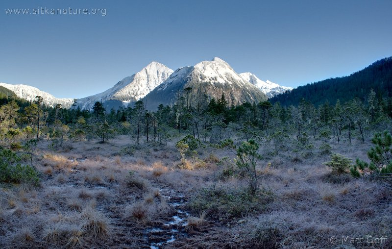 Snow Covered Sisters
