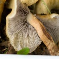 Sidewalk Mushroom