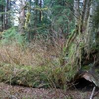 Fungus Habitat