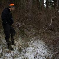 Deer Browse