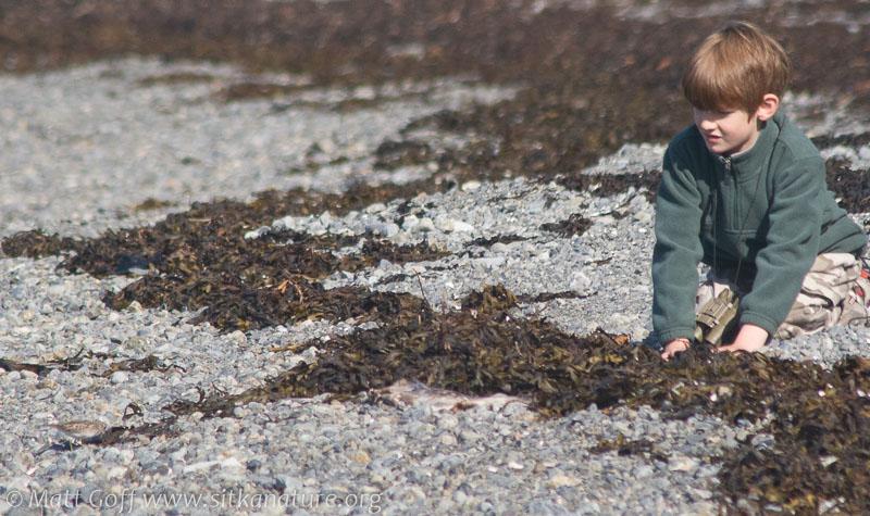 Connor and a Sandpiper