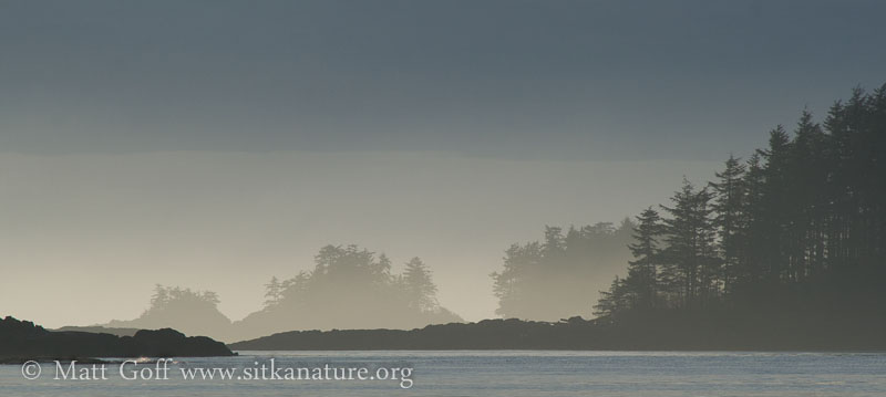 Fading Fog