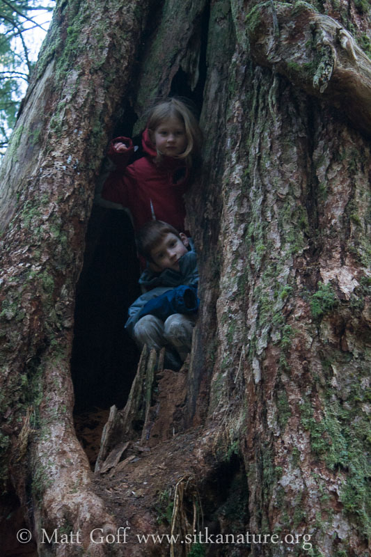 Connor and Rowan in the Big Tree