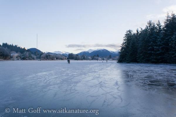 Frozen Swan Lake