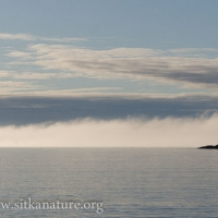 Fog over Water