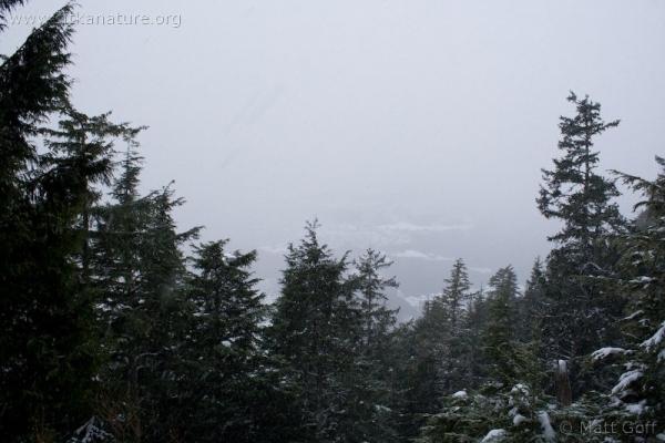 Verstovia Trail View