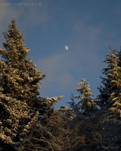 Early January Moon