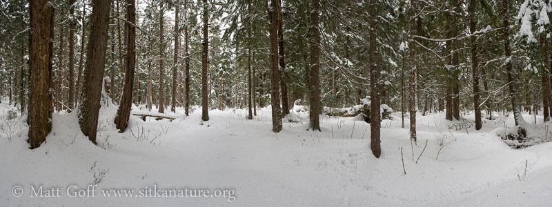 Upper Valley Forest