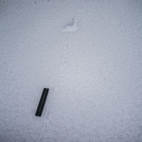 Small Mammal Tracks