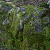 Bryophyte Covered Rock