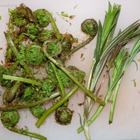 Lady Fern Fiddleheads and Fireweed