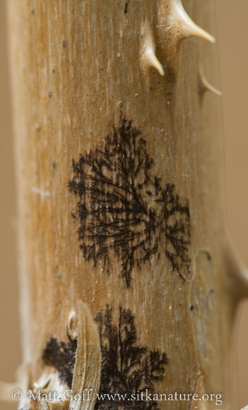 Dendritic Growth