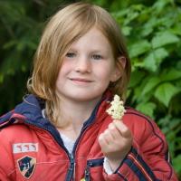 Rowan with Elderberry flowers