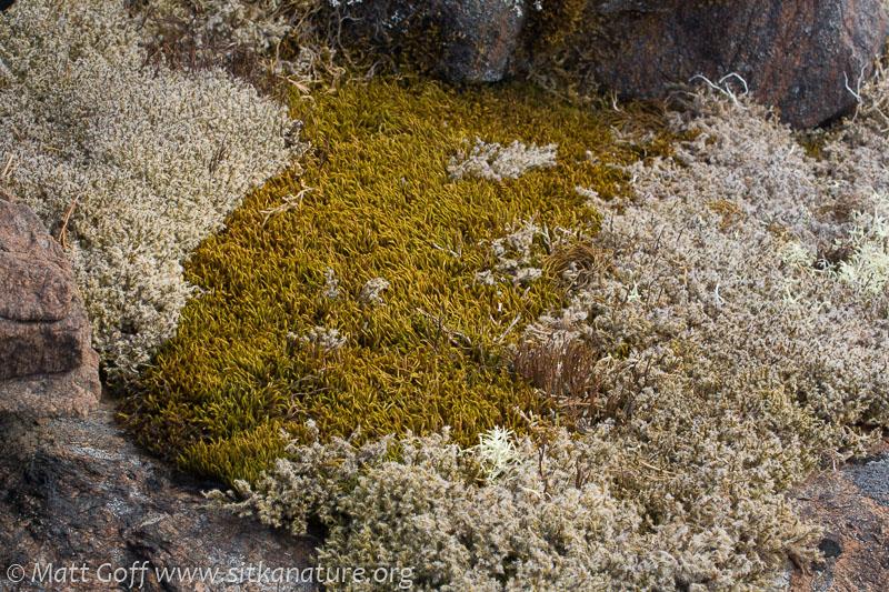 Lichens and Bryophytes
