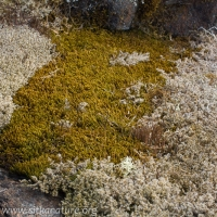 Lichens and Bryophytes