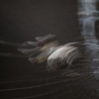 Orb Weaver (Cyclosa conica)