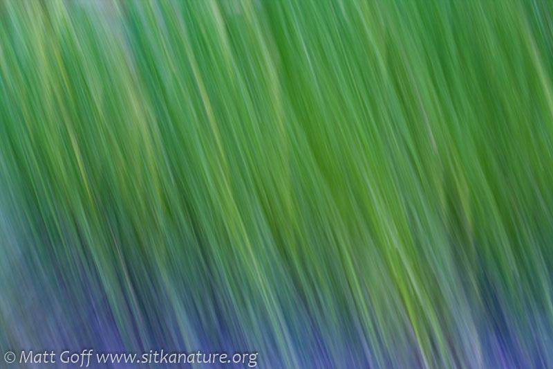 Motion blur Green