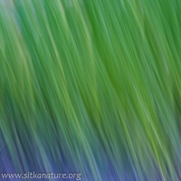 Motion blur Green