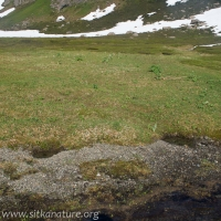 Subalpine Meadow Microhabitats