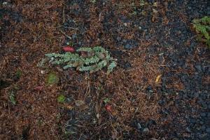 Hemlock Trimmings