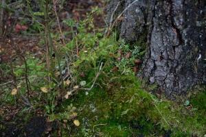 Hemlock Cone Stash