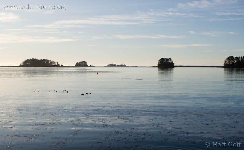 Crescent  Bay Birds