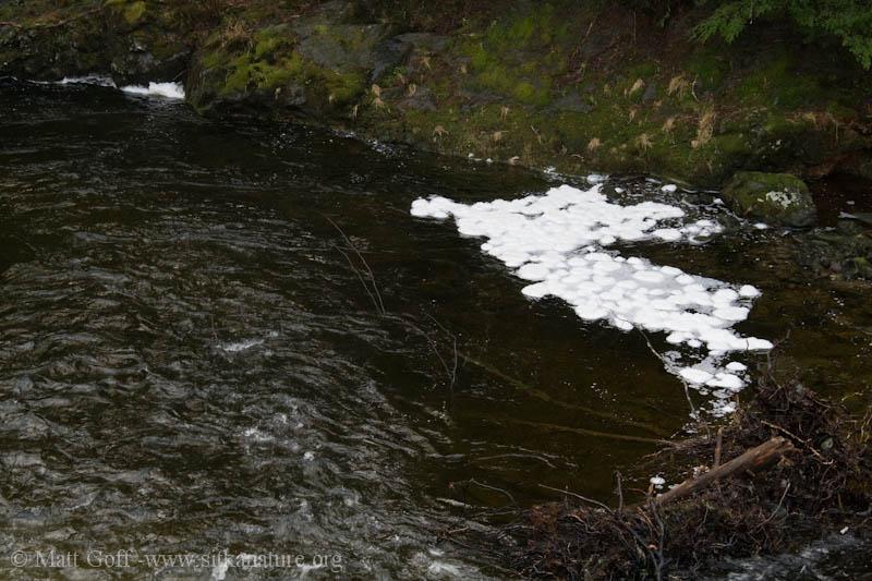 Indian River Foam