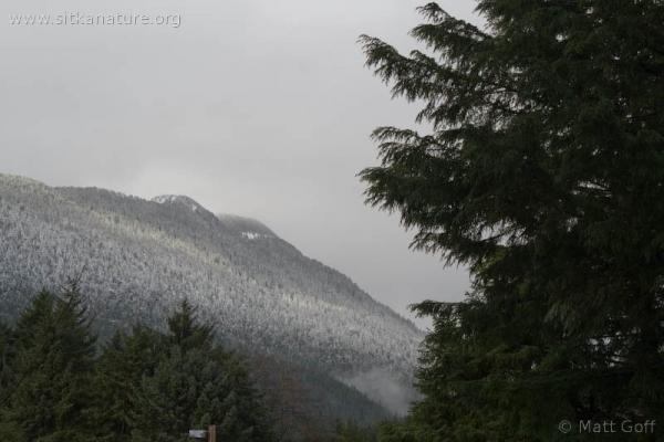 Gavan Snow Level