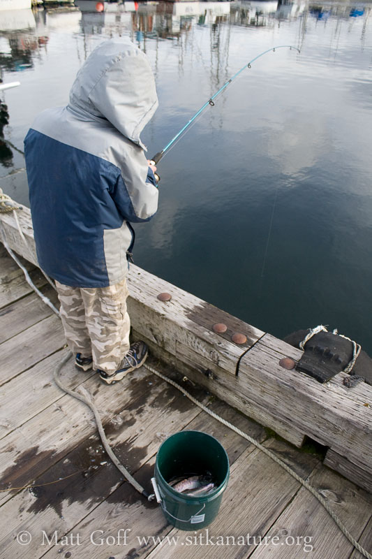Connor Fishing for Herring