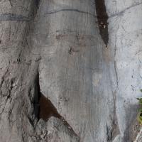 Glacial Tracks
