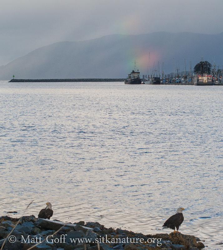 Bald Eagles and Broken Rainbow