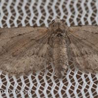 Worn Moth