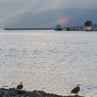 Bald Eagles and Broken Rainbow