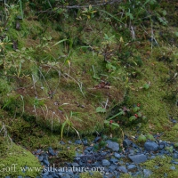 Moss Slump