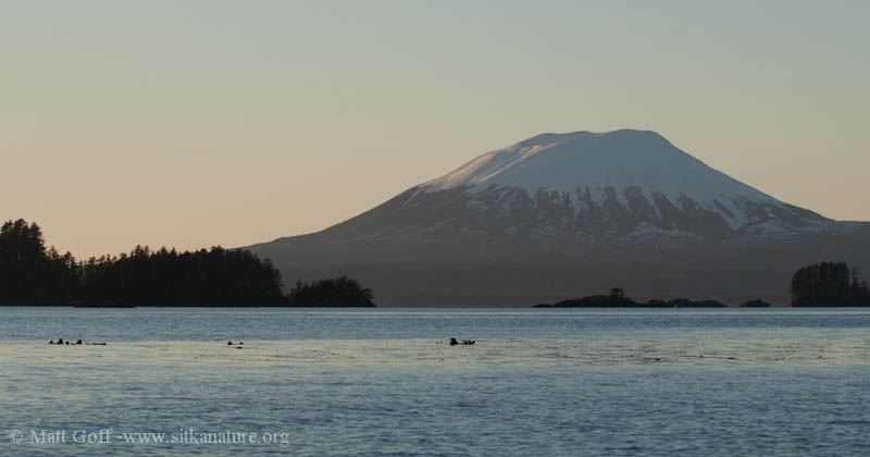 Mt. Edgecumbe and Otters