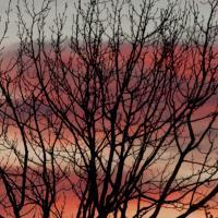 Sunset Tree Silhouette