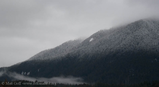 Slopes of Mt. Verstovia