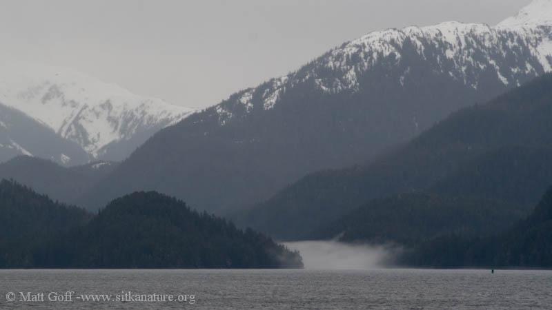 Camp Coogan Fog