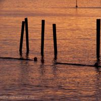 Pilings and Sunset Reflection