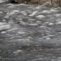 Ice and Slush at Totem Park