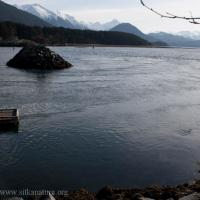 Tsunami Currents in Crescent Harbor