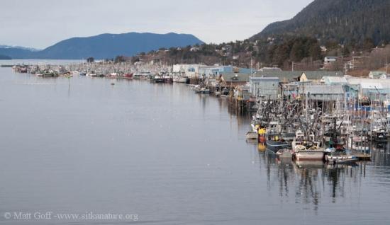 Herring Fishing Fleet