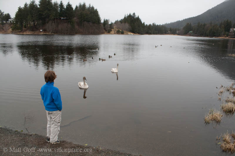 Trumpeter Swans and Connor