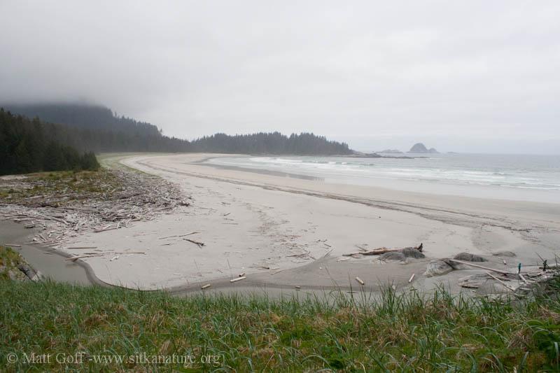 Sealion Cove